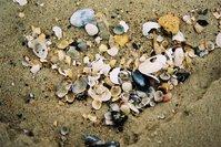shells Baltic Sea