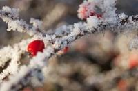 Wintertime 2