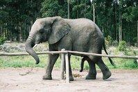 sexy elephant
