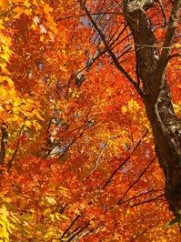 Summer & Fall 5