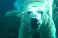 Polar Posing