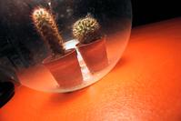 dous cactus nunha mesa
