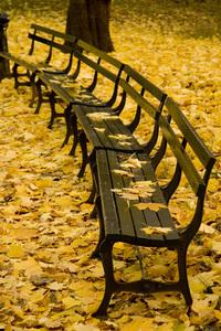 Autumn in New York 5