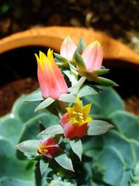 Short flowers