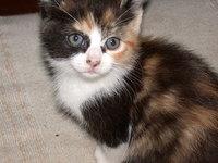my cat's kitten 4
