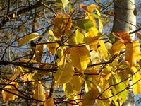 autumn palet