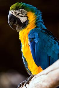 Curious Bird! 1