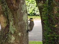 woodpecker_ 3