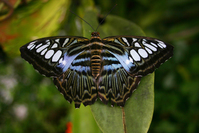 Blue and Black Butterfly on a