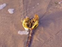 Northumbrian Beach 3