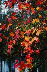 Backyard Leaves in Fall