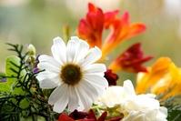flowers, flores 1