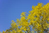 Swedish autumn colours 2
