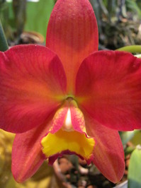 Hawaiian Flowers 11