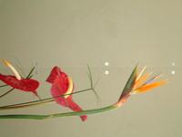 Flower,Flowers