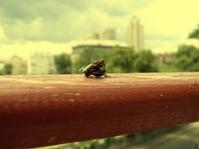 fly sex