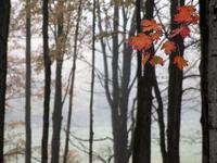 Gray Autumn Day