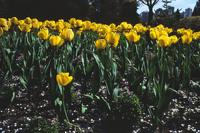 Flowers in Stanley Park 5