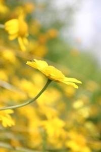 wild flowers 20