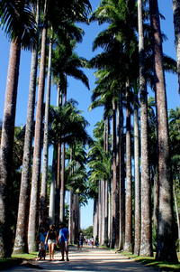 Jardim Botanico Rio de Janeiro