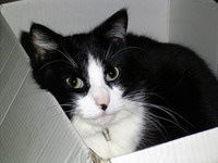 Living in a cardboard box