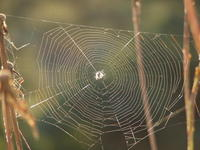 searchin' the web 1