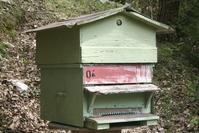 Beekeeper in vercor