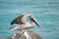 pelican series 2