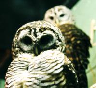 Spooky Owls 2
