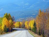 automn road