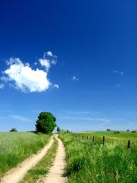 lonley_road_tree 3