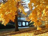 Autumn colours at Stourhead Ga