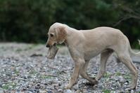 Dog with bone 1