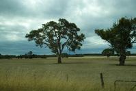 Landscape - Tree