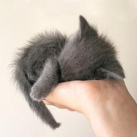 el gato gris mas tierno del mundo