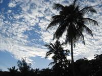 Caribbian Sky