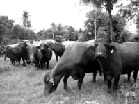 Fazenda Bufalo Bill