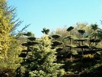 Topiary art 3