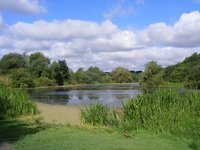 Lake - Higham Ferrers Nature Reserve