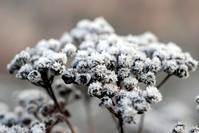 Frozen berries 3