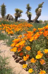 Spring in Desert 2