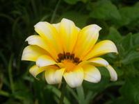 Flowers Flores 4