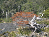 naturally-created bonsai