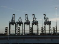 Urban Cranes