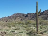 ArizonaDesert 13