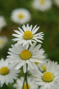 Daisy's 2
