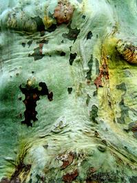 pattern of nature 1