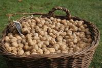 Basket of walnuts