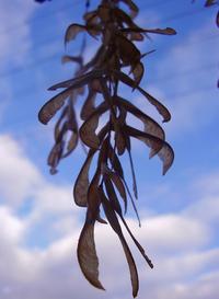 spiral leaves