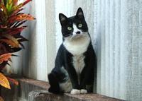 My cat Mimi 1